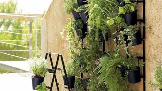Las plantas en maceta crecen en altura