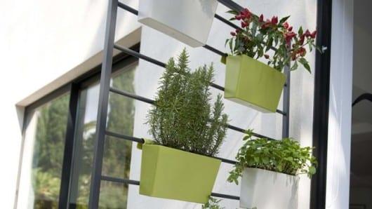 plantas en maceta crecen en altura