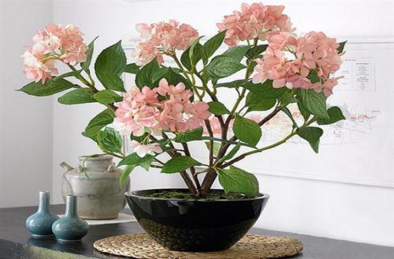 Las plantas artificiales como objeto de decoración