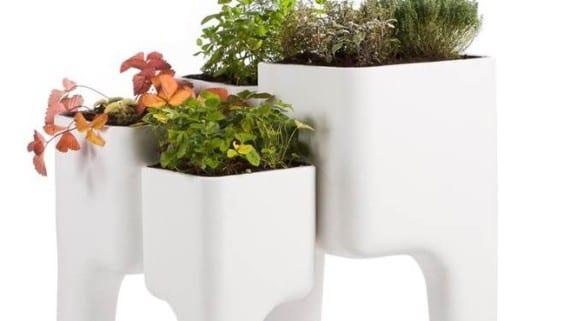 Diseño vegetal