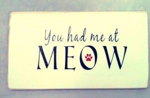 Cartel relacionado con el mundo de los gatos