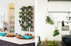 Hierbas aromáticas en la cocina