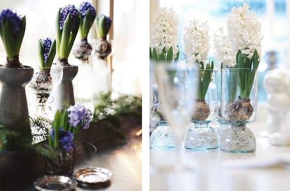 Buslbos de jacinto decoración mesas