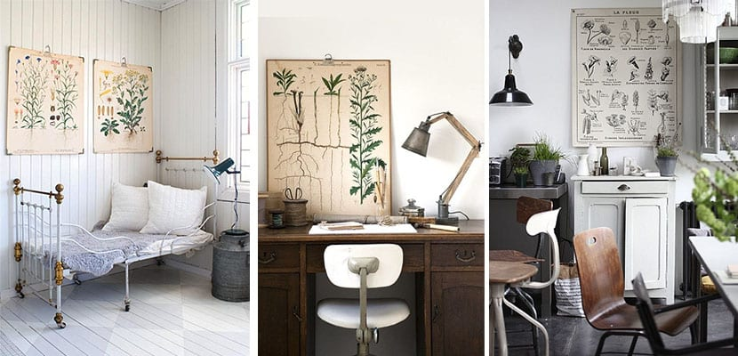 Láminas de botánica en la pared