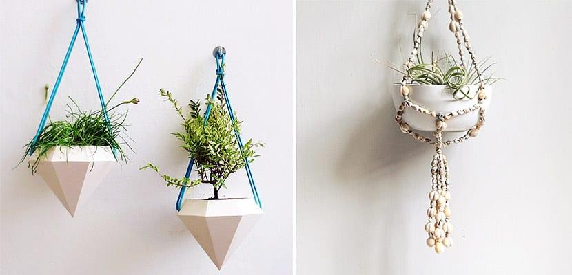 Plantas colgadas