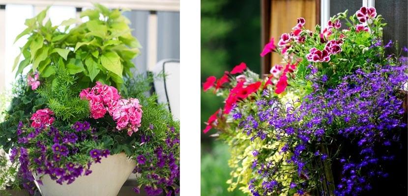 Jardineras ventana