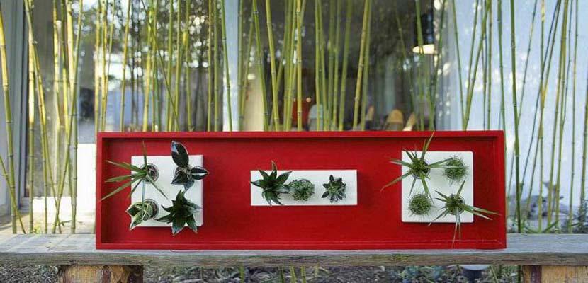 Cuadros de plantas Wallflower