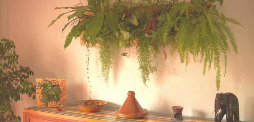 Wallflower, cuadros de plantas