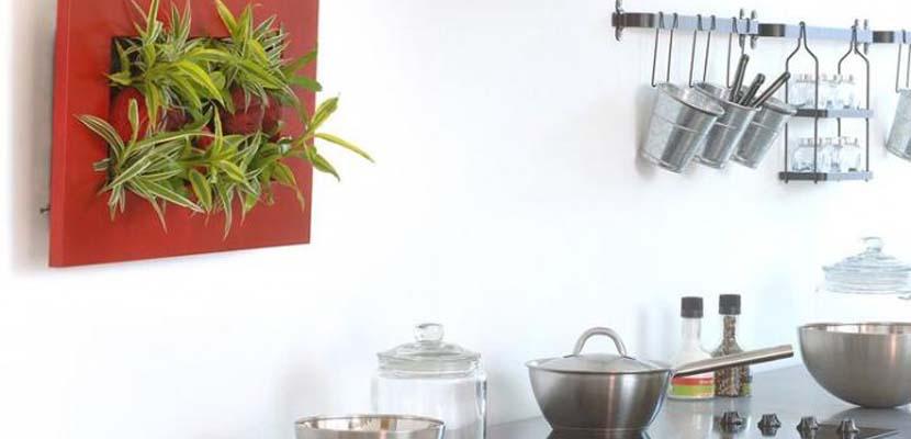 Cuadros de plantas para la cocina
