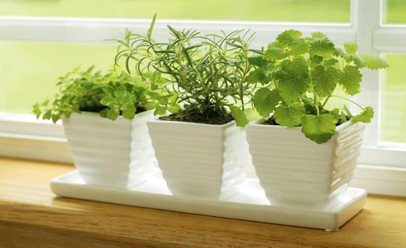 plantas de interior macetas