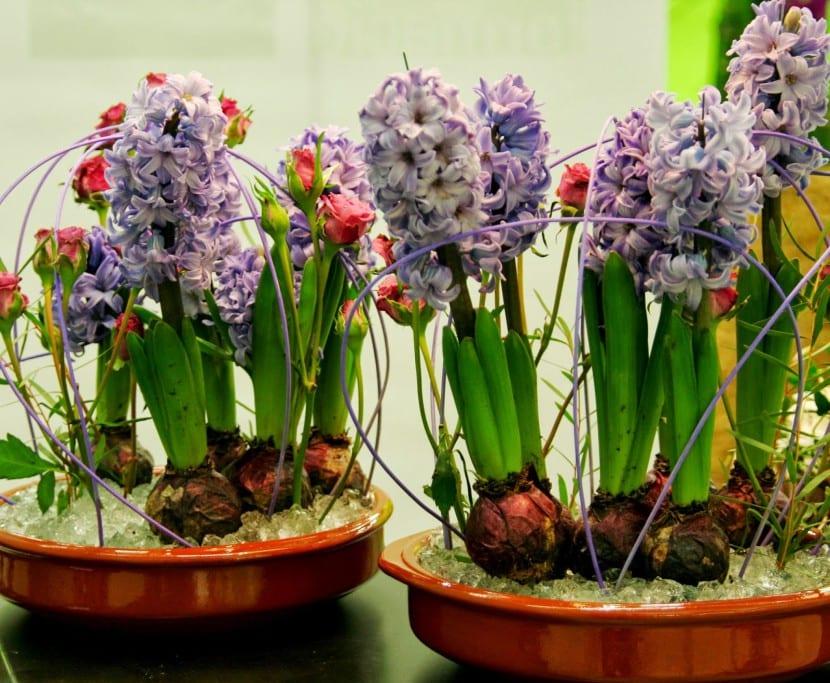 plantas de interior moradas