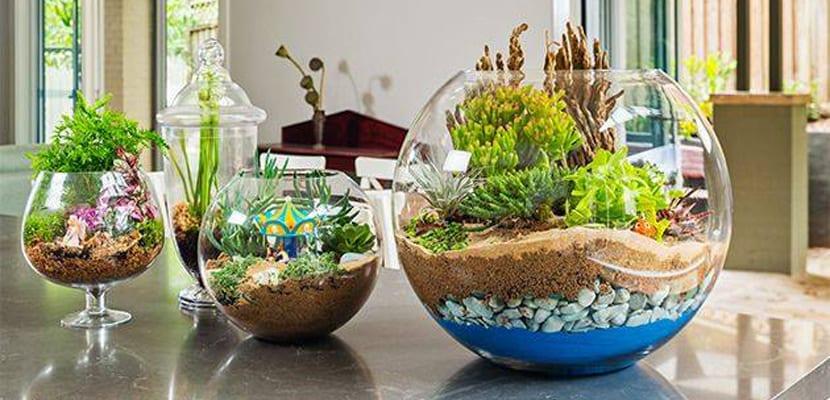 Terrarios para plantas