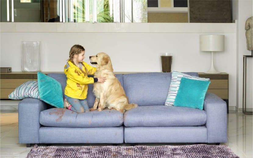 limpiar sofá