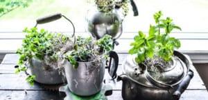 Plantas en el hogar