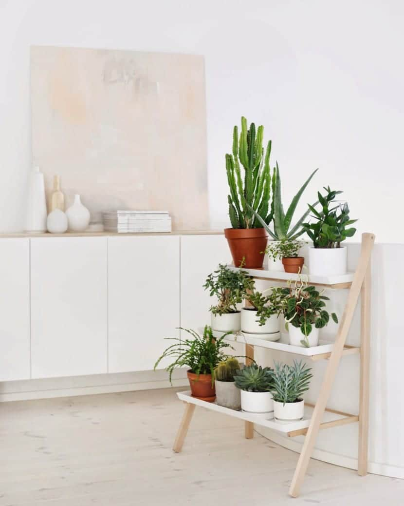 Ideas para decorar tu hogar con plantas for Decoracion de paredes interiores fotos