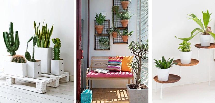 Stands de plantas
