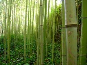 bambú para decoración baños