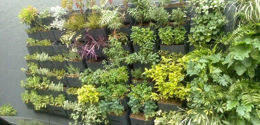 Huerto vertical para qu sirve ventajas e ideas para for Como tener un jardin en casa