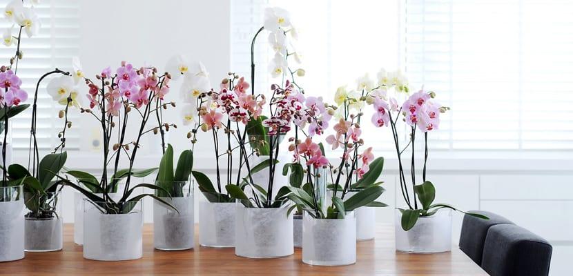 Elementos decorativos para el hogar de una mujer elegante for Decoracion con plantas en living
