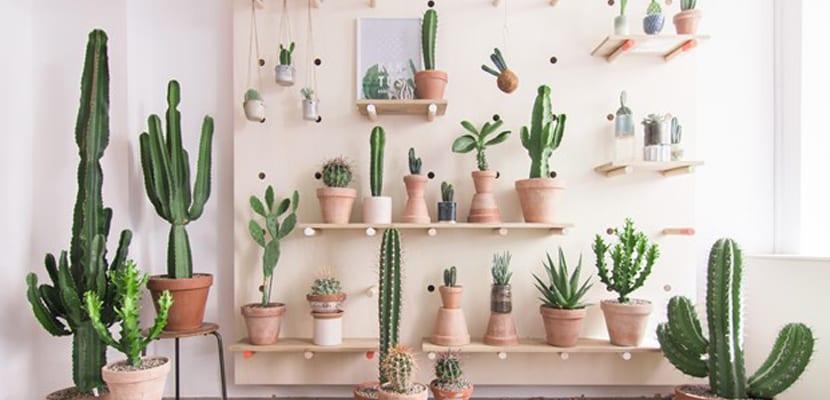 Cactus para decorar el hogar