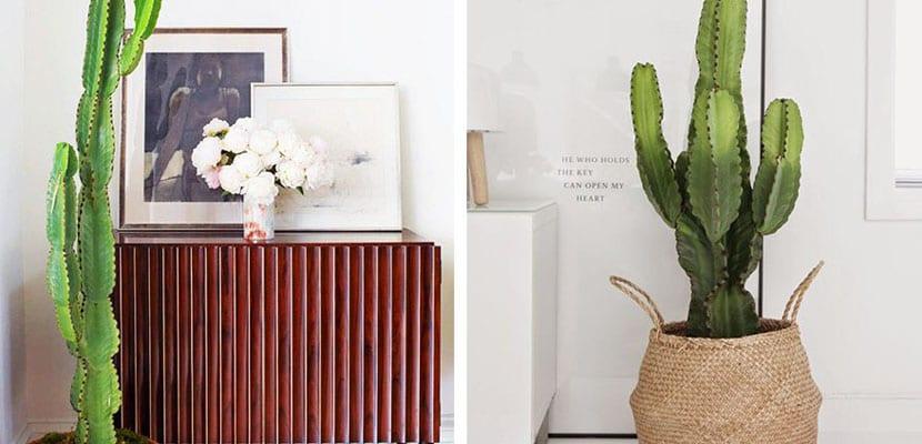 Cactus para decorar rincones