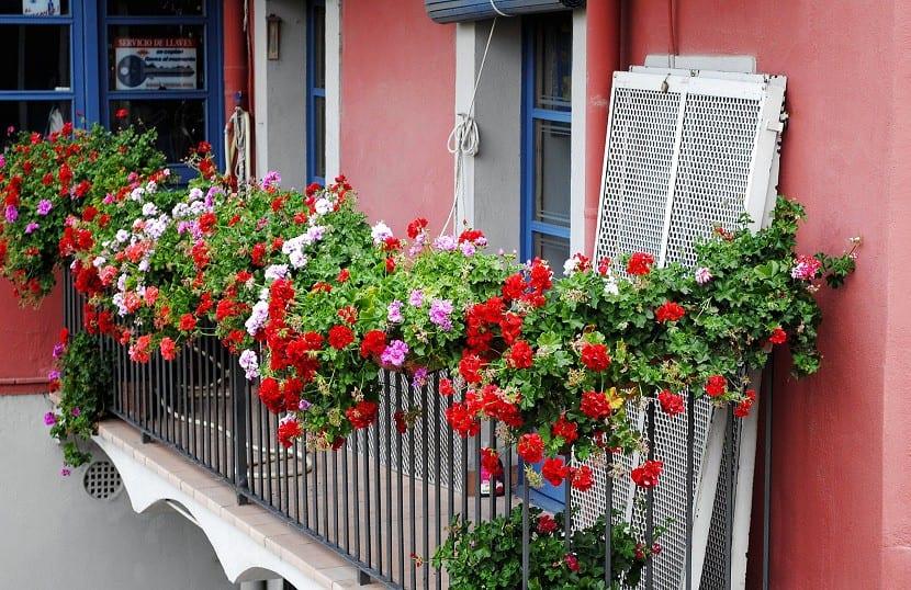 Las mejores plantas para decorar tu balc n for Que plantas poner en una jardinera
