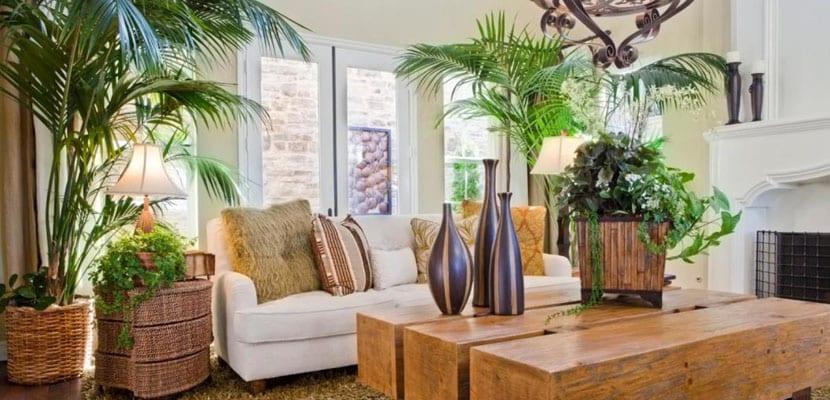 Plantas de interior para el hogar - Plantas bonitas de interior ...