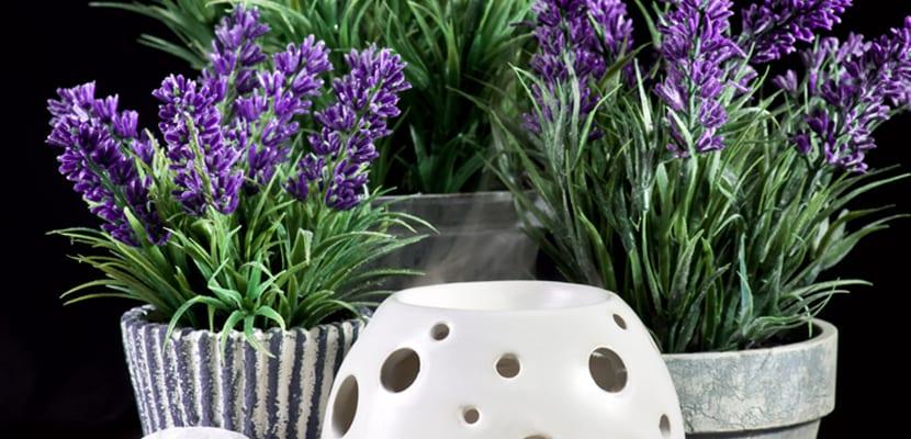 Las mejores plantas para el ba o - Plantas en el bano ...