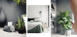 Plantas verdes sobre fondo gris