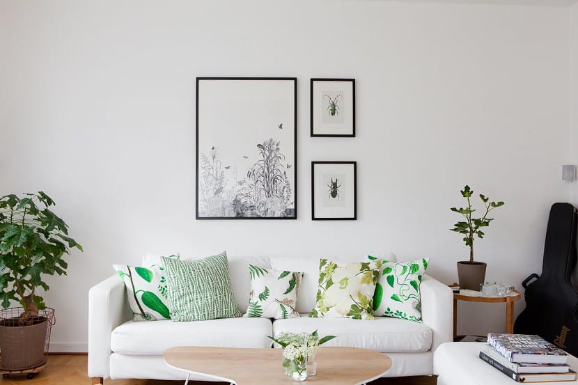 decoración plantas