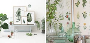 Inspiración botánica con plantas