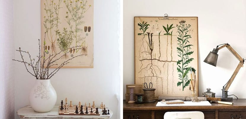 Inspiración botánica con láminas vintage