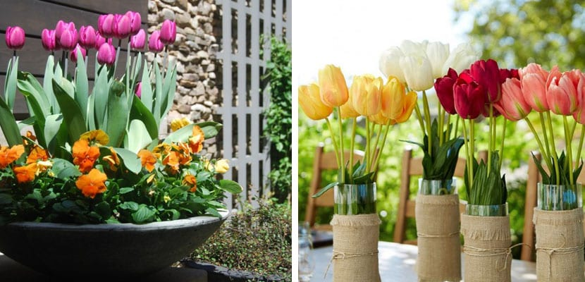 Decorar con tulipanes