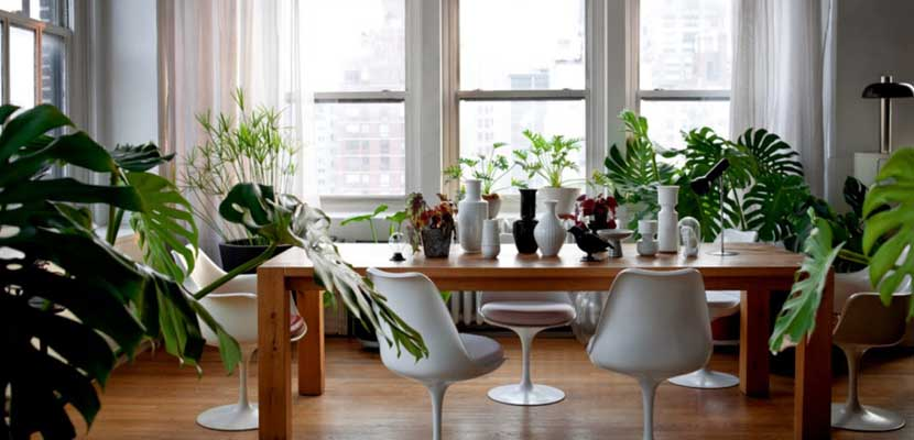 Decorar el hogar con plantas