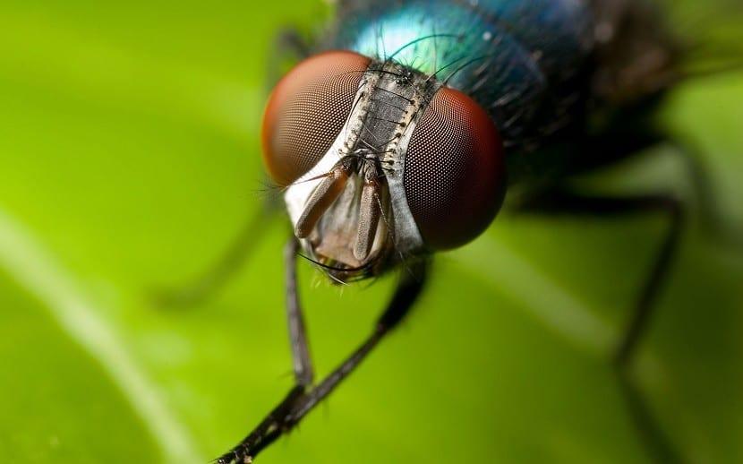 mosca portada
