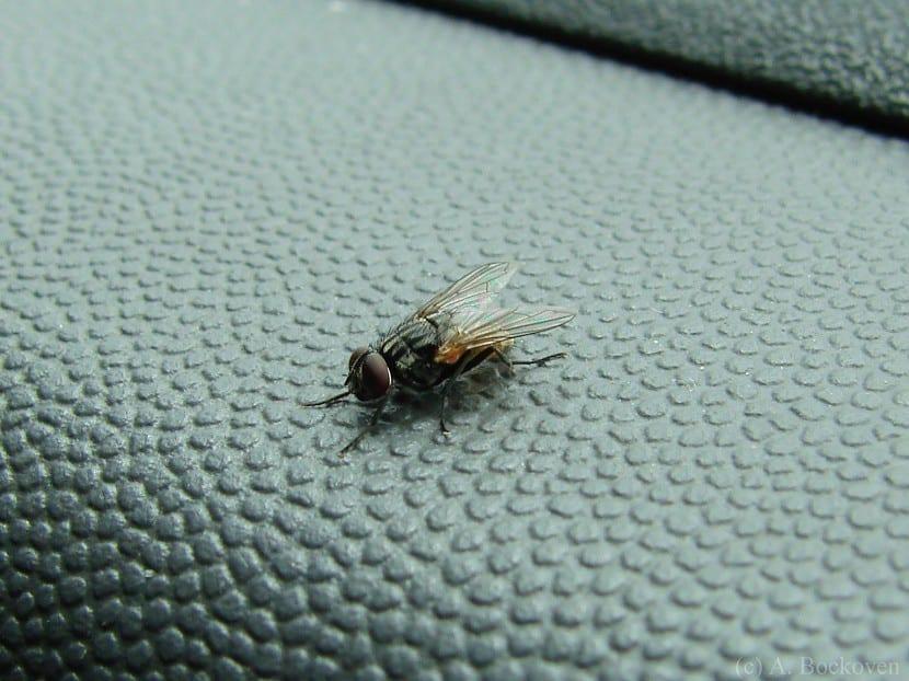 mosca silla