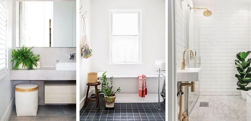 Decora con plantas verdes tu cuarto de ba o for Cuartos de bano verdes