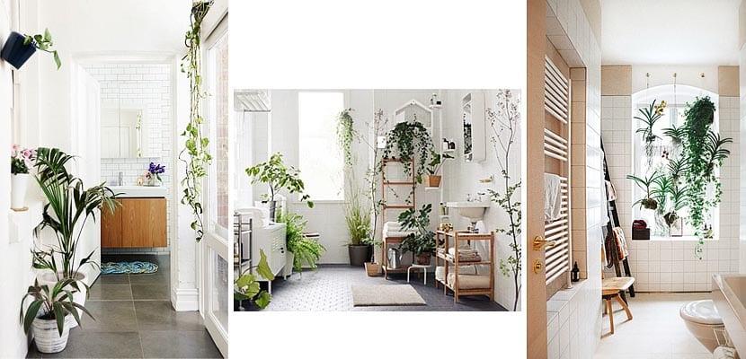 Plantas en el cuarto de baño