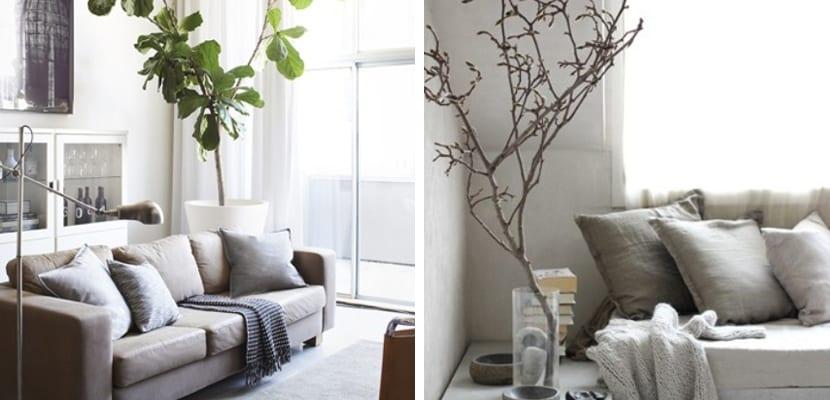 Salón en tonos neutros con plantas
