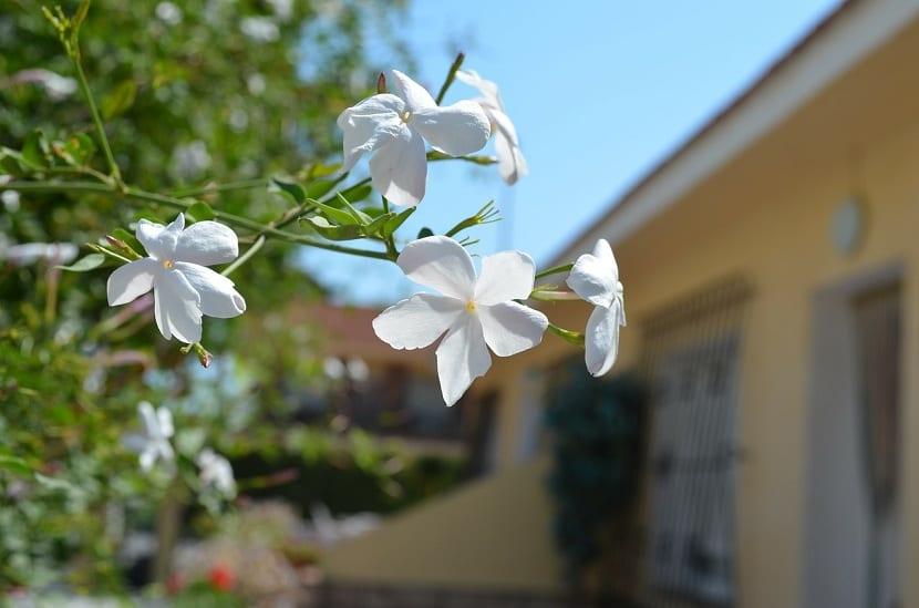 Plantas que atraen la buena energía al hogar