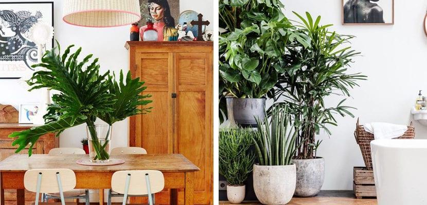 Estilo exótico con plantas