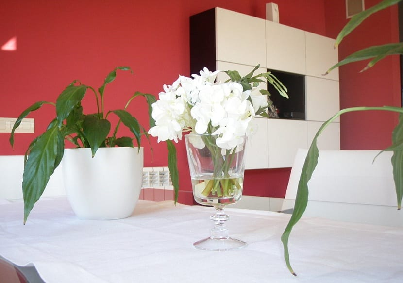 Ideas para decorar interiores con plantas for Ideas para decorar interiores con plantas