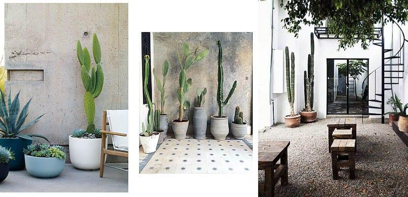 Cactus y suculentas jardín