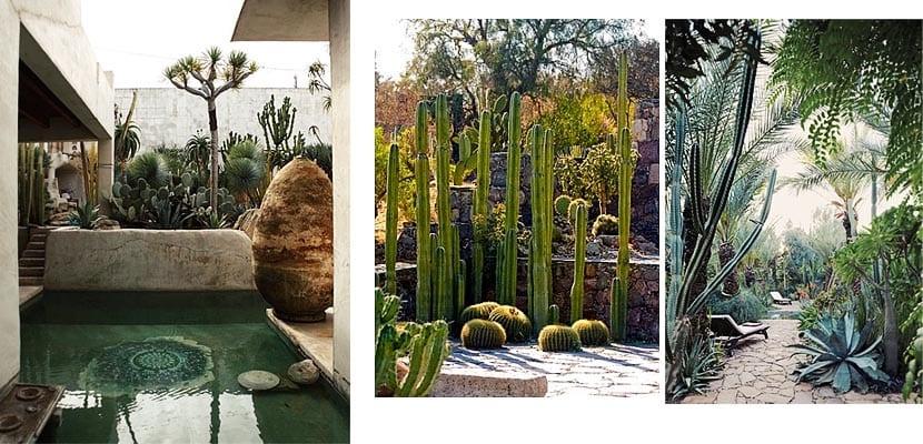 Cactus y otras suculentas para decorar el jard n o patio for Cactus cuidados exterior