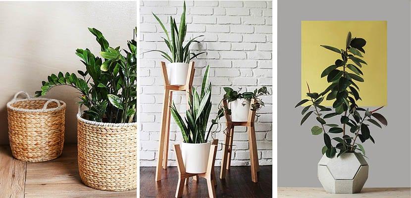 Maceteros de tendencia para las plantas de interior - Plantas de interior para salon ...