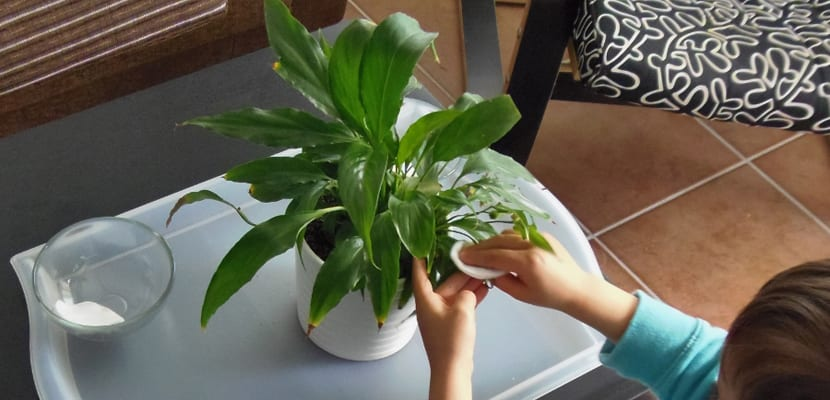 Limpiar plantas