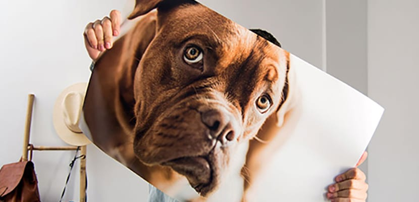 Poster de mascota