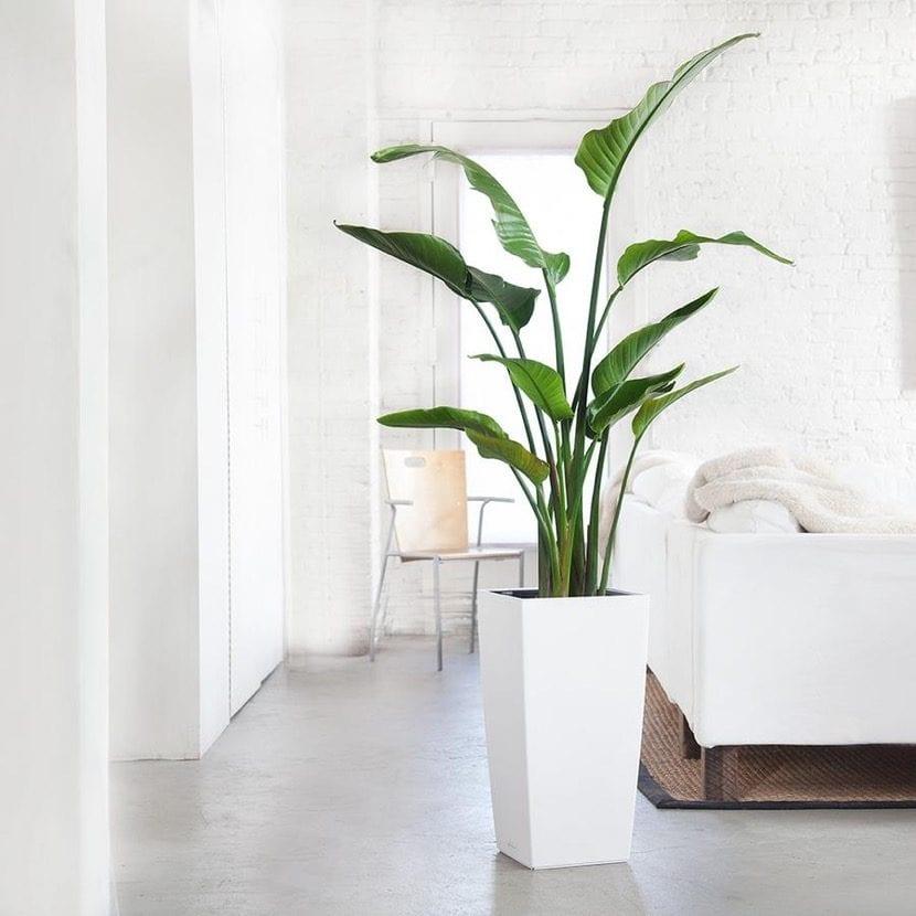 planta de interior grande al lado del sofa
