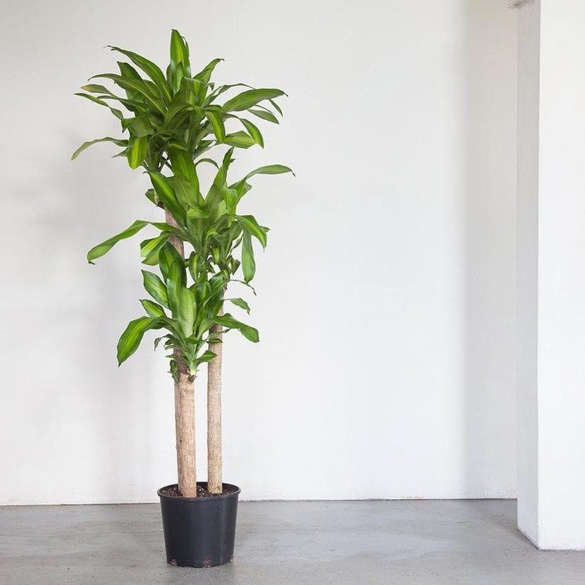 planta de interior grande delante de una pared