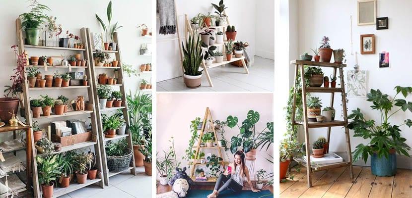 Esntería escalera con plantas